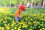 Малыш в оранжевой футболке собирает одуванчики, фото № 5939142, снято 22 мая 2014 г. (c) ivolodina / Фотобанк Лори