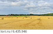 Золотые поля с тюками сена. Осень, фото № 6435946, снято 23 августа 2014 г. (c) Валерия Попова / Фотобанк Лори