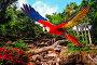Colourful flying parrot in tropical landscape, фото № 6704366, снято 18 августа 2009 г. (c) Andrejs Pidjass / Фотобанк Лори