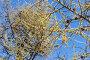 Ветки лиственницы на фоне голубого неба, фото № 6896578, снято 24 апреля 2014 г. (c) Argument / Фотобанк Лори