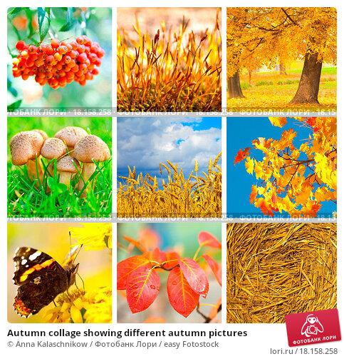 Фотографии коллаж осень своими руками