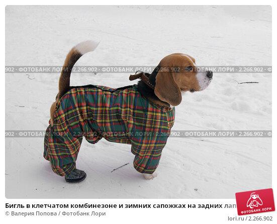 Бассейны петербурга - отзывы - littleone