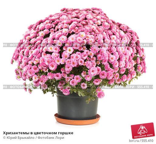 Горшковые цветы