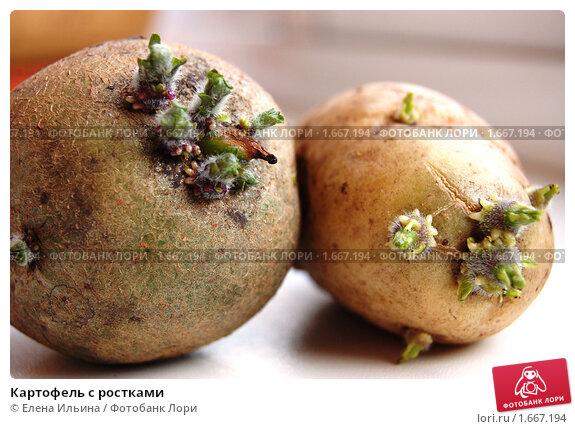 Рецепт из ростков картошки