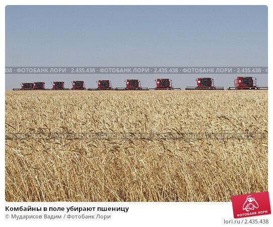 Комбайны в поле убирают пшеницу, фото № 2435438, снято 5 сентября 2006 г. (c) Мударисов Вадим / Фотобанк Лори