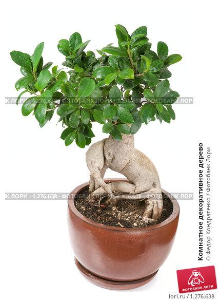 Комнатные растения нецветущие