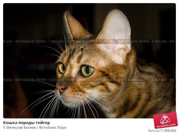 http://prv2.lori-images.net/koshka-porody-toiger-0001359602-preview.jpg