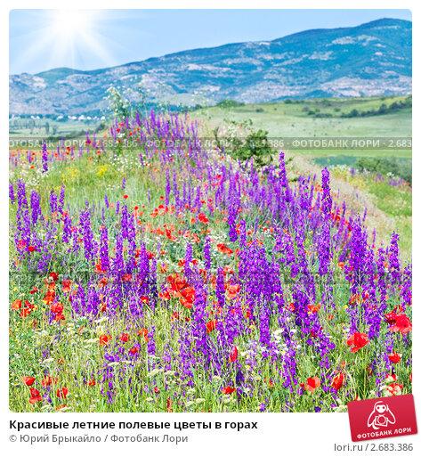 Летние полевые цветы в горах фото