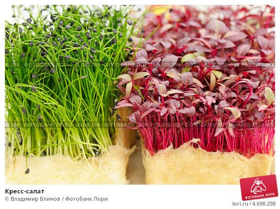 Разновидности кресс салата