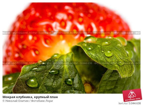 Мокрая клубника, крупный план; фотограф Николай Охитин; дата съёмки 22