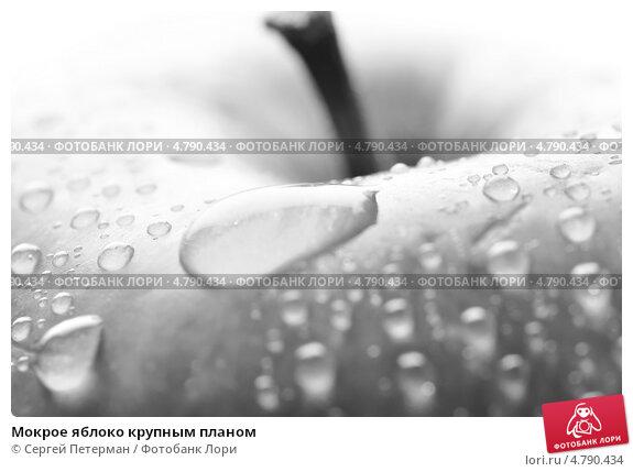 Мокрое яблоко крупным планом, фото 4790434, снято 23 июня 2013 г. (c