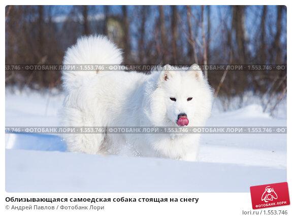 Павлов собака