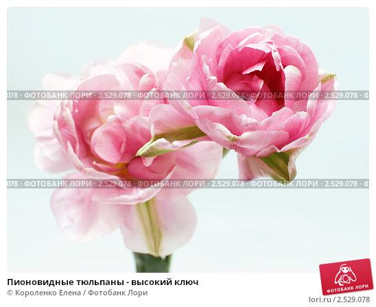 Купить цветы и букеты по низкой цене в