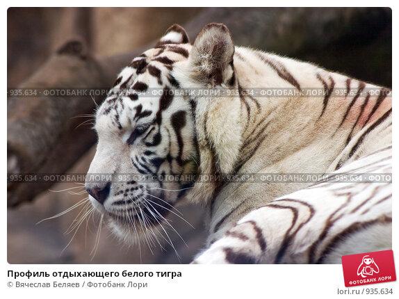 http://prv2.lori-images.net/profil-otdyhayuschego-belogo-tigra-0000935634-preview.jpg