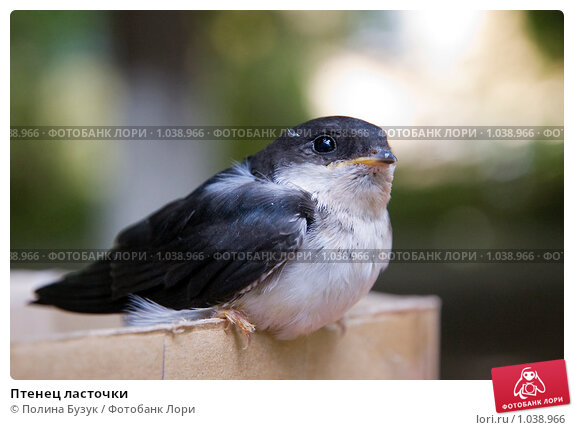 97693 из галереи гнездо ласточки фото