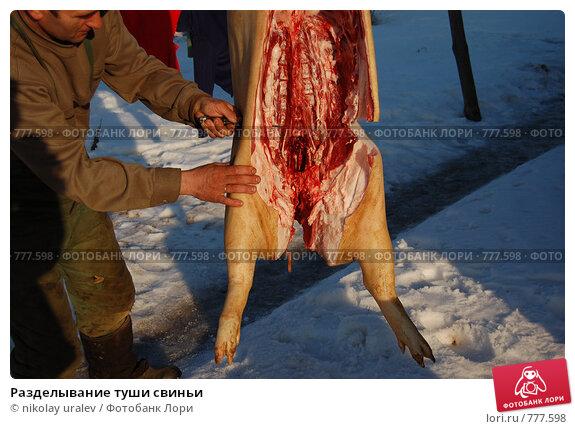 Разделывание туши свиньи, фото 777598, снято 28 марта 2009 г. (c) nikolay uralev / Фотобанк Лори.