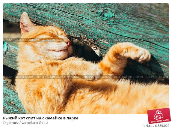 Рыжая на скамейке 4 фотография
