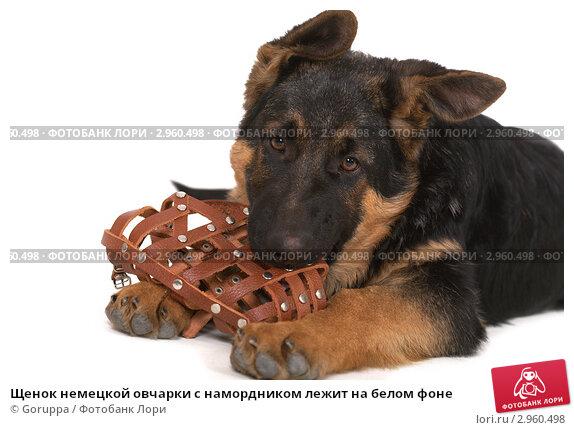 Как сделать намордник для щенка