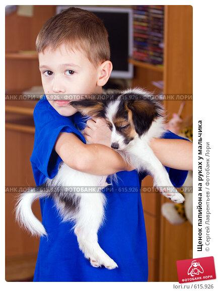 Щенок папийона на руках у мальчика