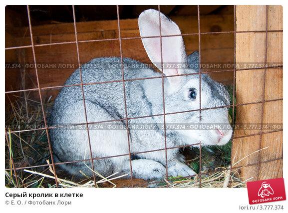 Клетка для кролика видео скачать