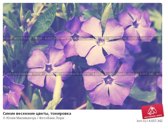 Первые весенние цветы цветы первые