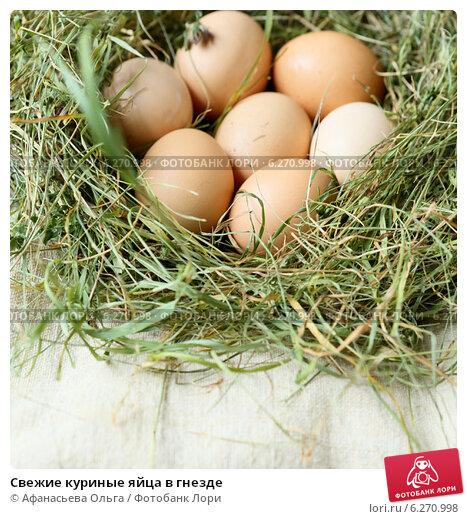 Как благоустроить курятник насестами и гнёздами? куриное гнездо