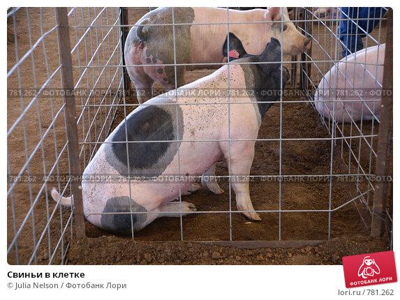 Как сделать баз для свиней
