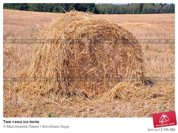 Тюк сена на поле; фото 3745986, фотограф Мастепанов Павел. Фотобанк Лори - Продажа фотографий, иллюстраций и изображений, видео