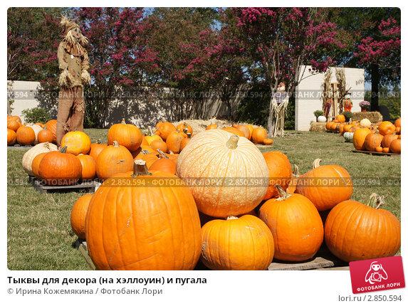 Тыквы для декора (на хэллоуин) и пугала, фото 2850594.