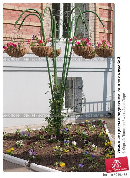 Уличные цветы в подвесном кашпо с