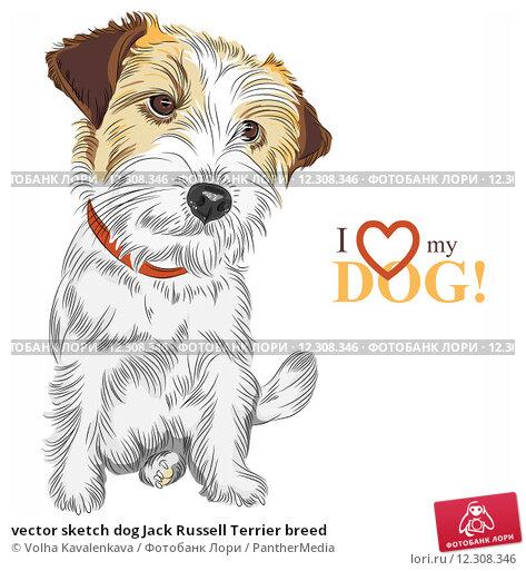 vector sketch dog Jack Russell Terrier breed; фото 12308346, фотограф PantherMedia. Фотобанк Лори - Продажа фотографий, иллюстра