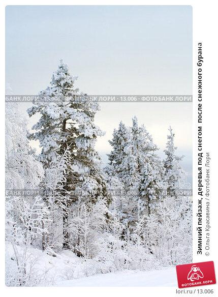 Зимний пейзаж, деревья под снегом  после снежного бурана, фото № 13006, снято 3 ноября 2006 г. (c) Ольга Красавина / Фотобанк Лори