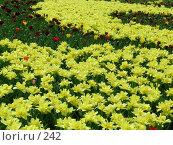 Купить «Газон с тюльпанами», эксклюзивное фото № 242, снято 11 мая 2004 г. (c) Ирина Терентьева / Фотобанк Лори