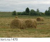 Купить «Тюки сена», эксклюзивное фото № 470, снято 21 августа 2004 г. (c) Ирина Терентьева / Фотобанк Лори