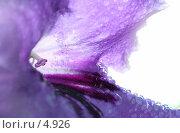 Купить «Цветок стрептокарпуса. Макро. Капли воды. На белом фоне», фото № 4926, снято 25 июня 2018 г. (c) Ольга Красавина / Фотобанк Лори