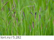 Купить «Ирисы», фото № 5282, снято 17 июня 2006 г. (c) Дарья Олеринская / Фотобанк Лори