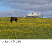 Купить «Пасущийся конь», фото № 5526, снято 18 июня 2005 г. (c) Николай Гернет / Фотобанк Лори