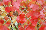 Осенний листья, фото № 5858, снято 27 июля 2017 г. (c) Юлия Перова / Фотобанк Лори