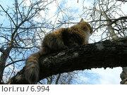 Купить «Рыжая кошка на дереве», фото № 6994, снято 20 ноября 2017 г. (c) Юлия Перова / Фотобанк Лори