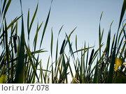 Купить «Закат на болоте», фото № 7078, снято 16 августа 2006 г. (c) Угоренков Александр / Фотобанк Лори
