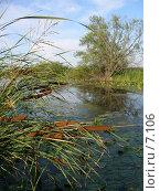 Купить «Камыши на фоне пруда», фото № 7106, снято 26 июля 2006 г. (c) Минакова Татьяна / Фотобанк Лори