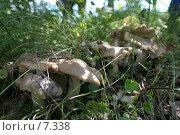Купить «Грибы», фото № 7338, снято 20 августа 2018 г. (c) Т.Кожевникова / Фотобанк Лори