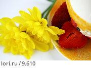 Купить «Желтый натюрморт с хризантемой и чашкой на белом», фото № 9610, снято 29 июня 2006 г. (c) Ольга Красавина / Фотобанк Лори