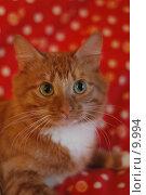Купить «Рыжий кот на красном фоне», фото № 9994, снято 16 января 2005 г. (c) Сайганов Александр / Фотобанк Лори