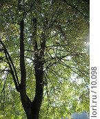 Купить «Свет солнца сквозь крону дерева», фото № 10098, снято 24 сентября 2006 г. (c) Маргарита Лир / Фотобанк Лори