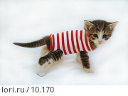 Купить «Котенок в полосатой одежке на светлом фоне», фото № 10170, снято 17 января 2005 г. (c) Сайганов Александр / Фотобанк Лори