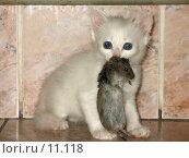 Купить «Котенок с мышкой в зубах!», фото № 11118, снято 30 апреля 2006 г. (c) Александр Паррус / Фотобанк Лори