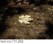 Купить «Кленовый лист на земле», фото № 11202, снято 2 октября 2005 г. (c) Santi / Фотобанк Лори