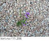 Цветок на камнях. Стоковое фото, фотограф Екатерина / Фотобанк Лори