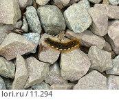 Гусеница и камушки. Стоковое фото, фотограф Екатерина / Фотобанк Лори